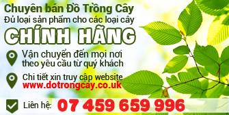 dat trong cay Anh Quoc-01 17